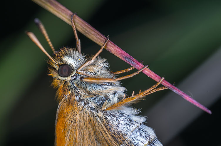 bug focus
