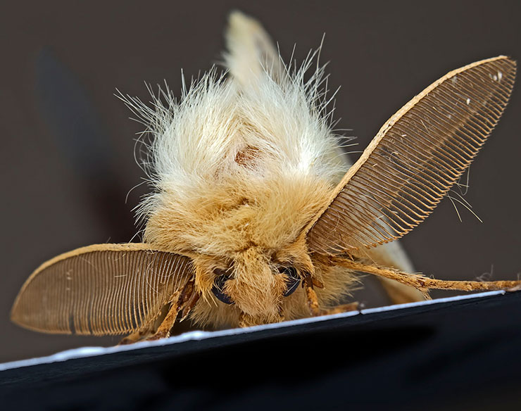 bug big